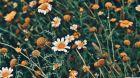 floral_2-wallpaper-3840x2160.jpg